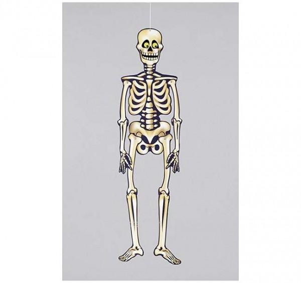 Papp-Skelett 0,90m