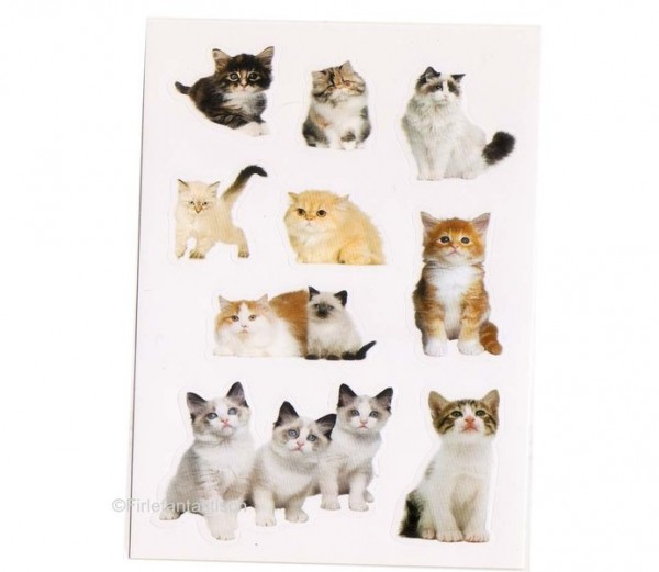 Foto-Sticker Katzen