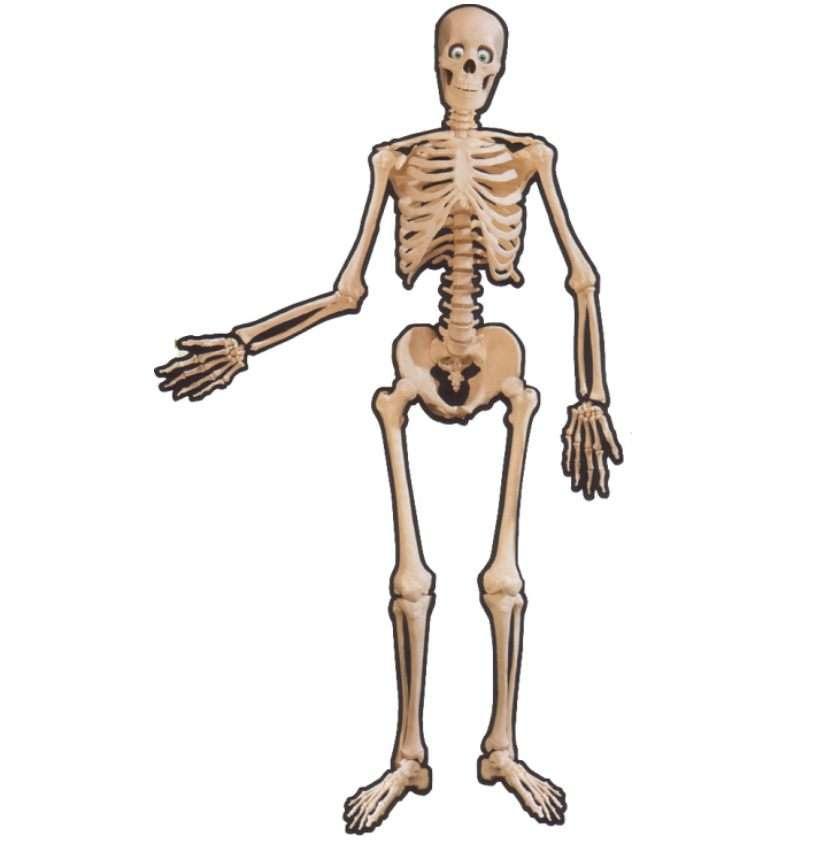 Skelett - Partyzubehör Gruseldekoration